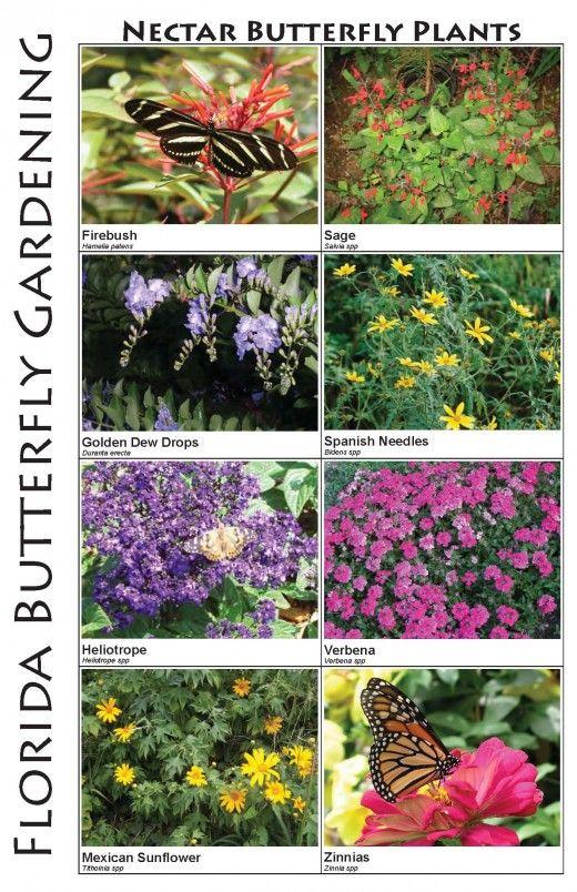 Butterflies U0026 Butterfly Plants Of Central Florida   Butterfly Plants,  Butterfly And Plants