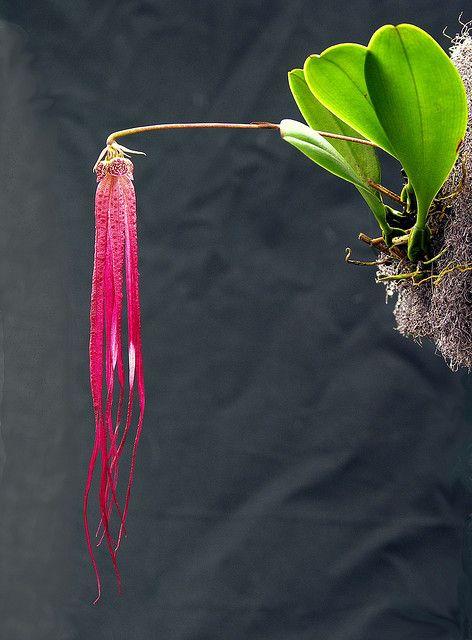 hermosa, creo es una orquídea.