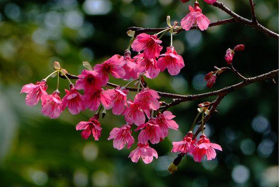 Flores bonitas de color fuchsia más allá del jardín