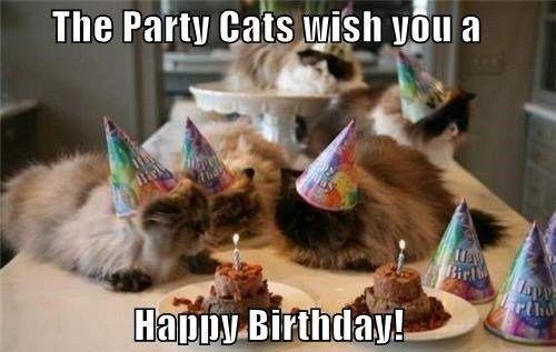 Dozens Of Hilarious Birthday Memes With Animals Funny Happy Birthday Meme Happy Birthday Cat Funny Birthday Meme