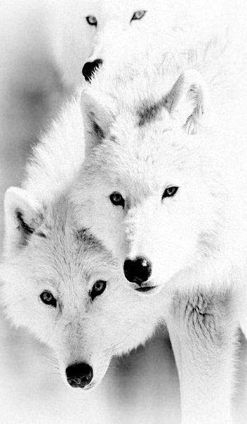 ANIMALES BLANCOS....❤                                                       …