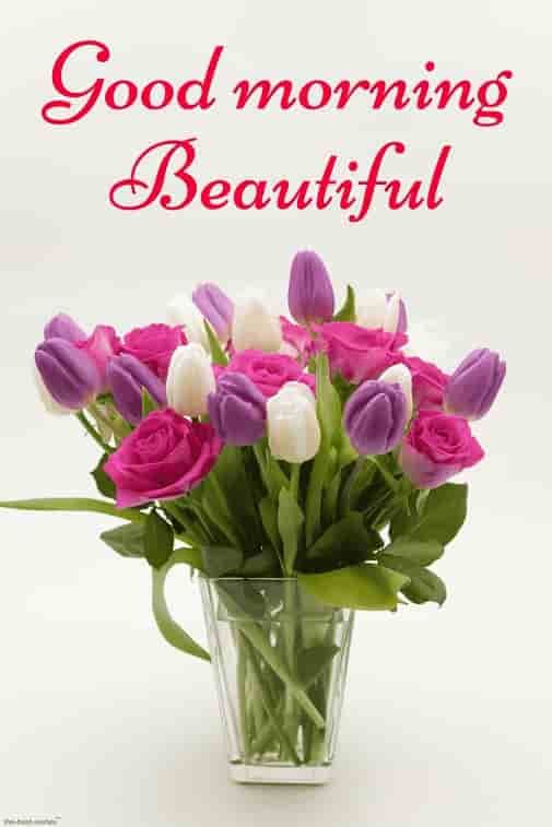 Best Good Morning HD Images, Wishes, Pictures and Greetings