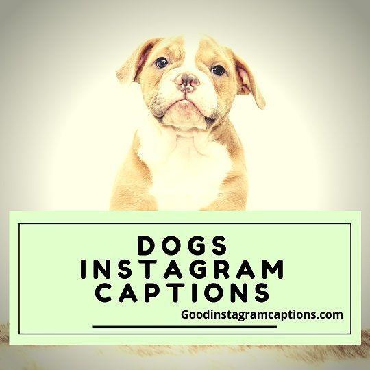 Captions Dog Facebook Good Instagram