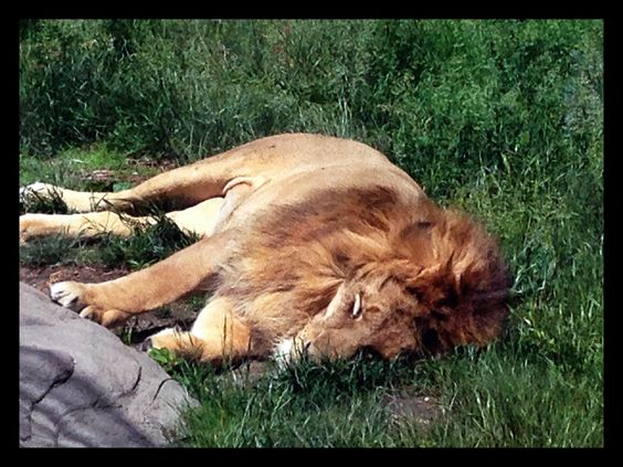 King of naps (By Erica Volltrauer)