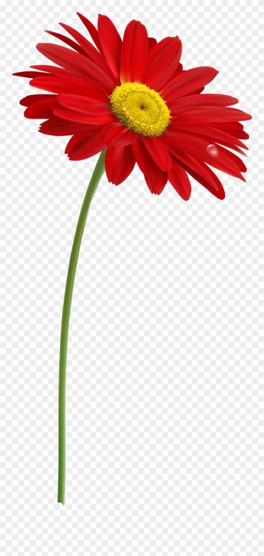 15 Flower Stem Png Rose Flower Png Flower Clip Flower Drawing