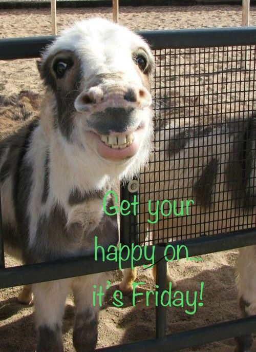 Pin By Pamela Smith On Viernes Silly Animals Funny Animal Memes Happy Friday Dance