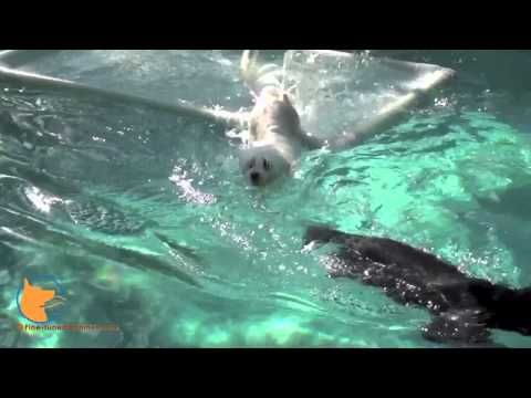 Swimming training for dogs and confidence building in Naples, Florida