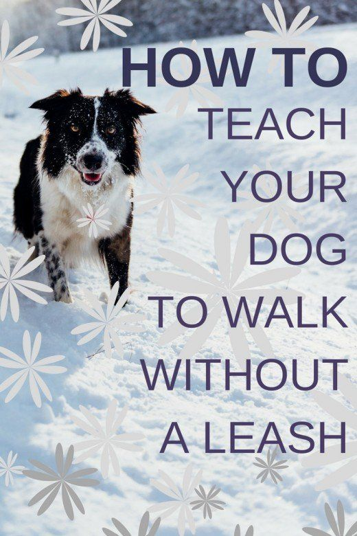 How To Train A Dog To Walk Next To You Without A Leash In 2020