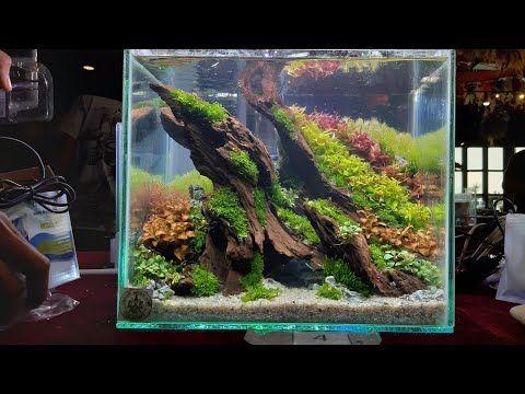 Nano Aquascape Quick Scape Cianjur Aquascape Contes Youtube Aquarium Landscape Aquascape Aquascape Aquarium