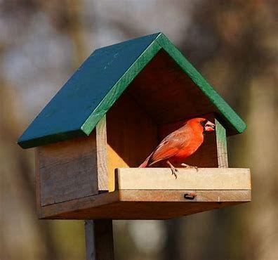 11++ Cardinal bird house plans ideas