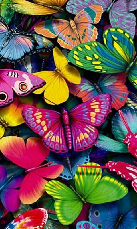 #colour #butterflies: