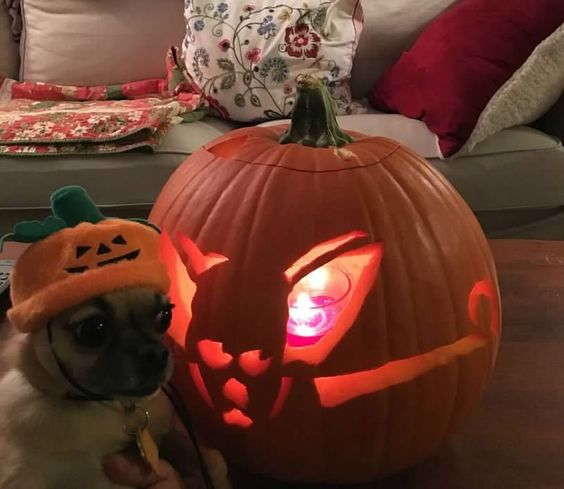 Who is Who?  Vote for best pumpkin in our contest!  http://twoquicks.shutterfly.com or  https://apps.facebook.com/my-polls/ttwnhr