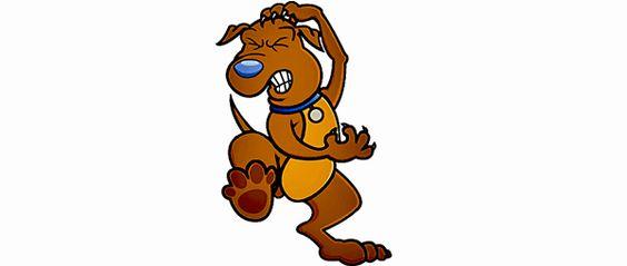 Cachorro.co: Vacina contra doença do Carrapato www.cachorro.co