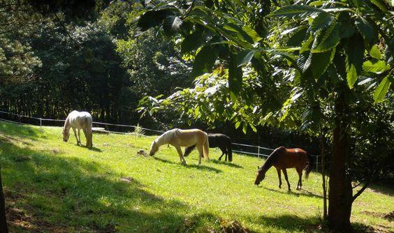 Galeria de Fotos - Hotel Rural La Solana - Posada de Caballos - Vacaciones con caballos
