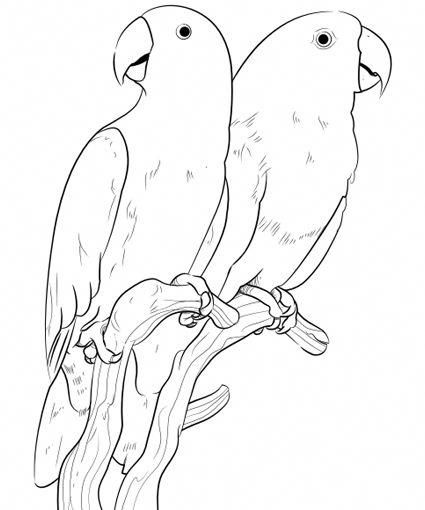 Pet Bird Parrot Finch Canary Coloring Pages Bird Coloring