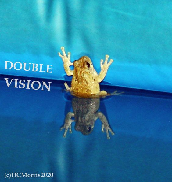 a frog on the side of the pool with reflection and words