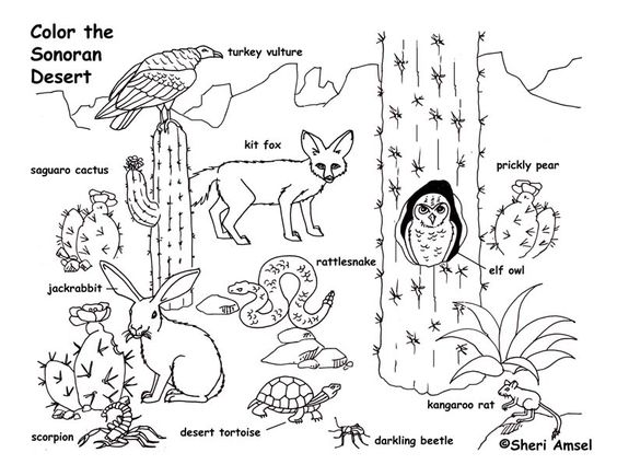 desert animals  animal coloring pages and coloring pages on pinterest