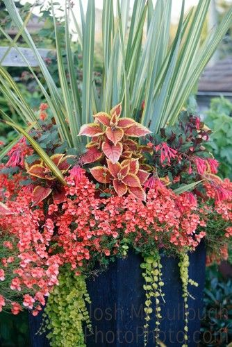 Container gardening Planters and I love on Pinterest