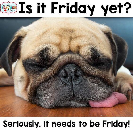 Teacher Humor.  We all feel like this on Fridays sometimes! Friday humor. A blog post full of teacher humor.: