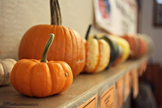 Kansas City Daytrips- Caroyln's Pumpkin Patch | Little Mrs 716 | Bloglovin'