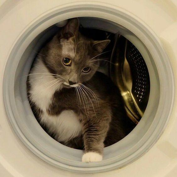 Zero Tasking Day 5 Household Tasks Cats Always Mess Up Cattime Cats Pet Hacks Homeless Dogs