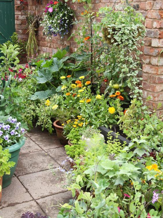 So beautiful and green on the patio!  Growing vegetables and herbs in containers.
