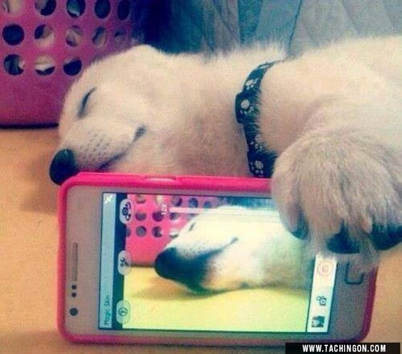 Selfie Dog!