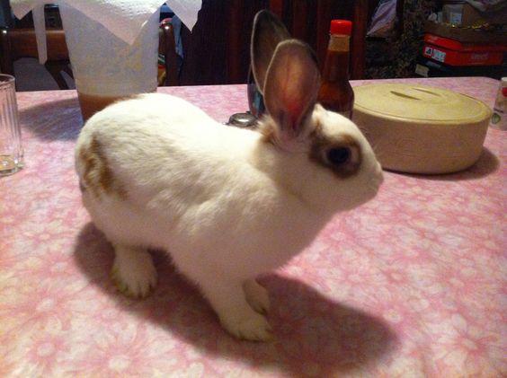 Love my bun!!