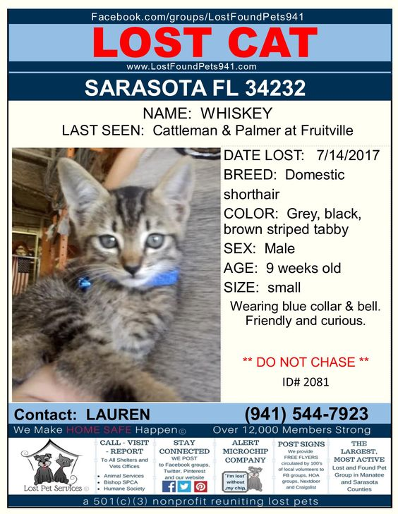 Have You Seen Whiskey Lost Cat Kitten Tabby Sarasota 34232 Missingpets Lostfoundpets941 Sarasotacounty Lost Cat Manatee County Sarasota County
