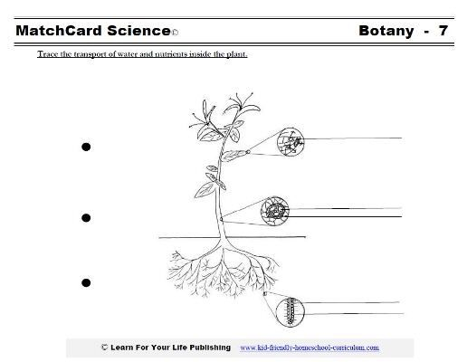 Junaida Binte Abdul Aziz  binteabdulaziz  on Pinterest moreover Observing water moving through plants   Nuffield Foundation besides Transpiration Worksheet   Elace additionally Transport Worksheet Plants besides What plants need to grow worksheets for pres besides Upper Primary Science   Plant Transport System moreover Master frameset as well How Plants Pull and Transport Water   dummies furthermore Master frameset in addition What plants need to grow worksheets for pres additionally Master frameset additionally  besides Transport in Plants    ppt video online download additionally Types of Plant Tissues   CK 12 Foundation furthermore  besides Life Processes Cl 10 Science CBSE   Transportation in Plants. on transport system in plants worksheet