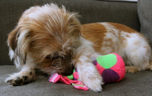 How To Make An Empty Water Bottle Dog Toy Cruncher Diy From The