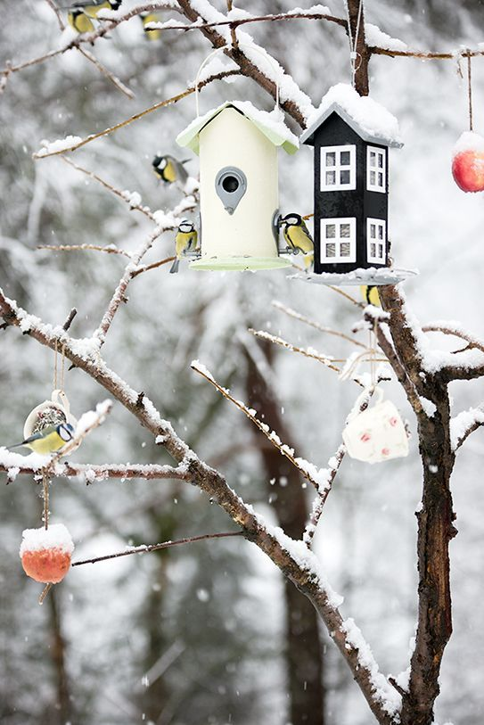 Bird feeders - I have to do this for the birds that come to our feeders all winter - Michigan winters are long & cold cj