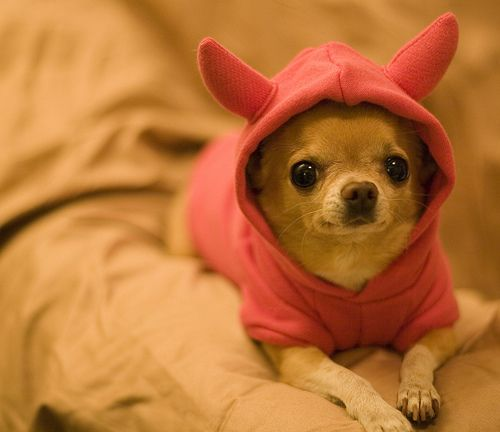 Dogs wear sweaters with spare ears