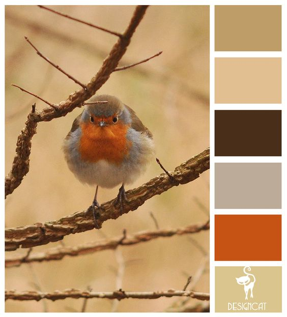 Robins Breast Paint Color