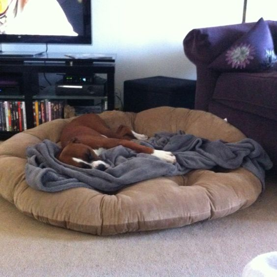 Get A Nice BIG Dog Bed For Cheap. Papasan Cushion From