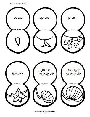 Fall pumpkin centers
