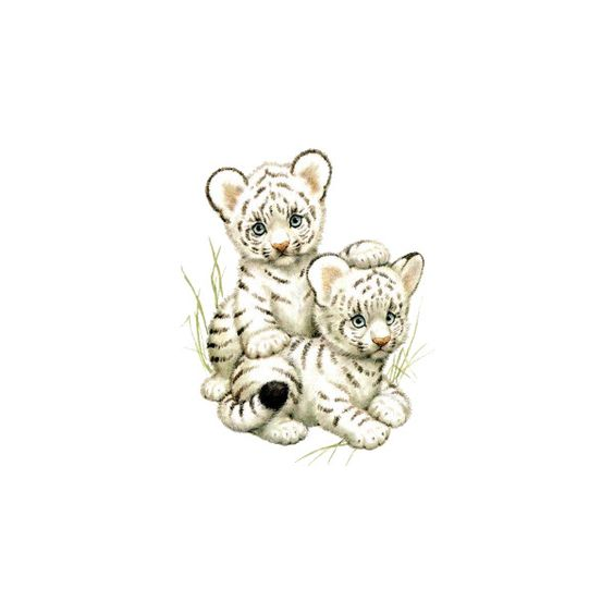 Tiger Clipart ❤ liked on Polyvore featuring animals, fillers, cartoon, lullabies and other