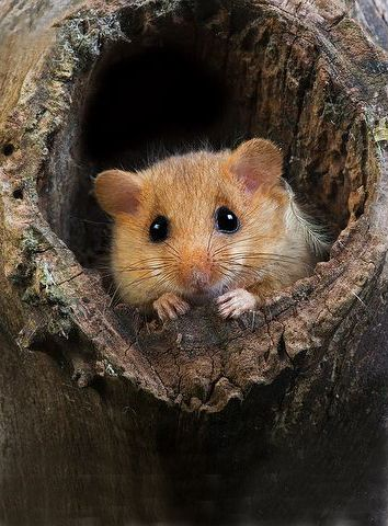 I found a dormouse the day after my lovely father in law died. I'd asked him to send me a sign all was well and lo.....