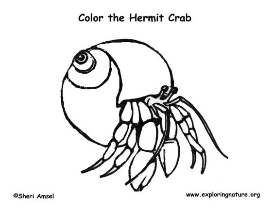 Hermit Crab Coloring Page Exploring Nature Educational | Cbssmm. | Hermit  Crabs | Pinterest