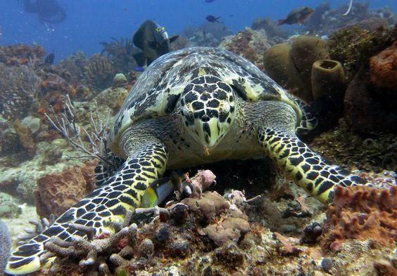 Palancar Reef (Cozumel, Mexico) on TripAdvisor: Address, Tickets & Tours, Geologic Formation Reviews