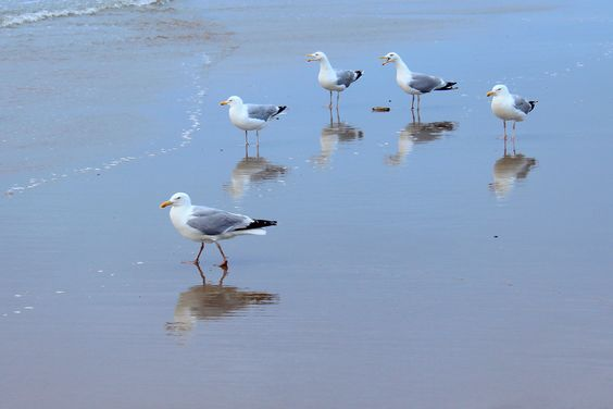 Gulls in conference - null