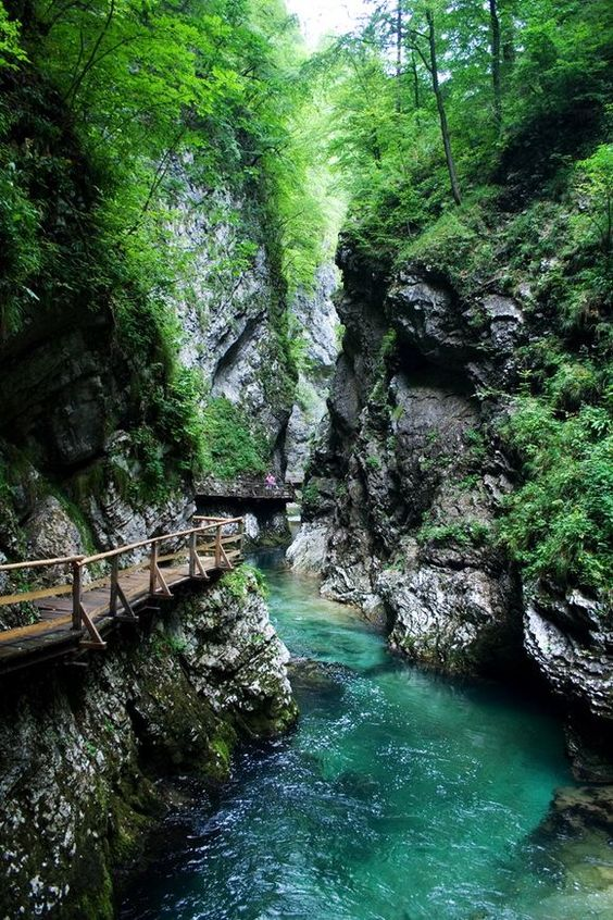 The Vintgar gorge is one of the most popular natural features in Slovenia. From Bled the route leads north towards the village of Podhom. All along the road there are clear signs for Vintgar, and then by local roads the route leads to the entrance to the gorge itself (3.5 km or 2.2 mi from Bled). The gorge has been arranged for visitors for more than a hundred years. http://www.theworldgeography.com/2013/04/gorges.html
