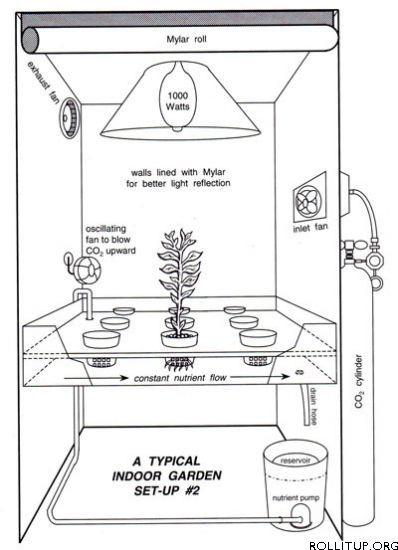 hydroponics for indoor growing