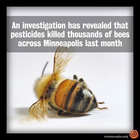 An investigation has revealed that pesticides killed thousands of bees across Minneapolis last month. More here: http://www.cornucopia.org/2013/10/pesticides-killed-bees-analysis-shows