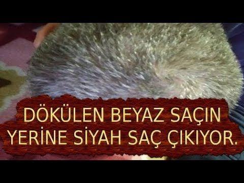 Ibn I Sina Nin Beyaz Saclara Cozum Onerisi Youtube Beyaz Sac