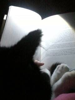 Rex: Cool Cats Read