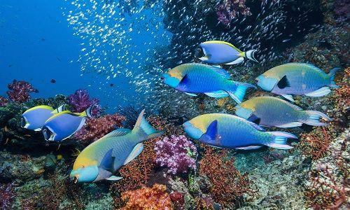 معلومات عن سمك الحريد وطريقة طهيه بالتفصيل Marine Fish Pet Fish Weird Fish