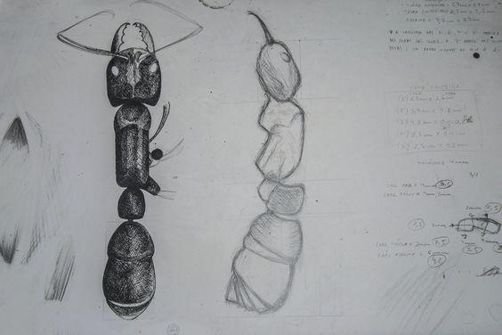 Estudo para confecção da Tocandira em resina poliéster. 2006