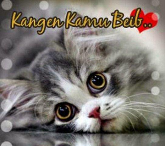 Gambar Kucing Lucu Dengan Kata Kata Galau Gambar Kucing Lucu Lucu Gambar