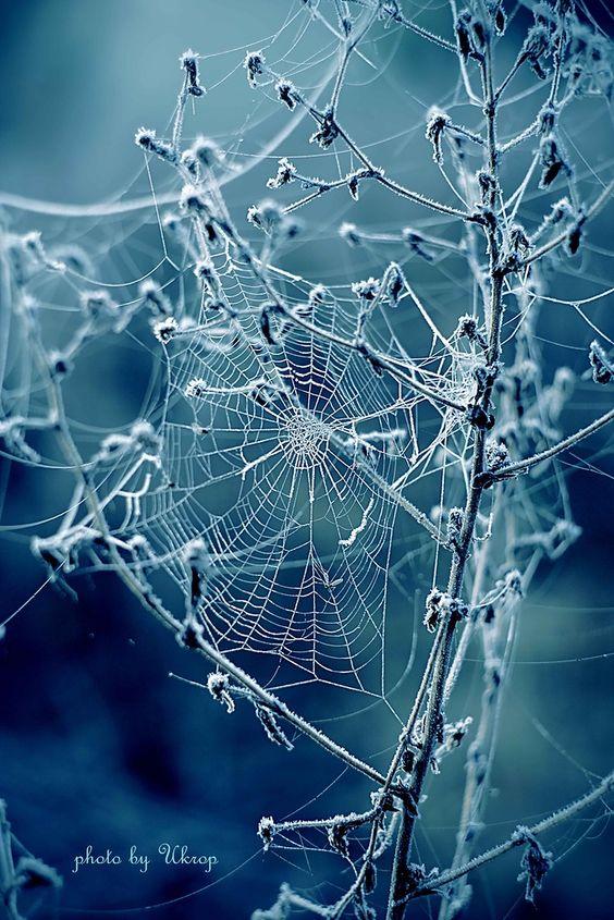 Spinnennetz, Frost | www.lavita.de: